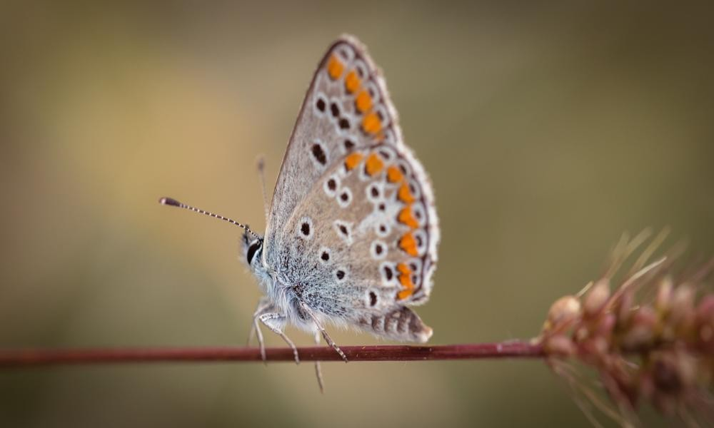butterfly garden deals